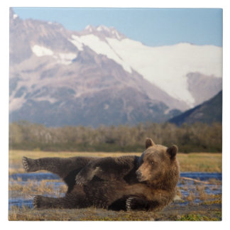 Brown bear, grizzly bear stretching on its back ceramic tile