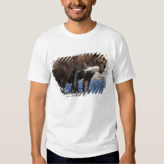Brown bear, grizzly bear, with salmon catch, shirts