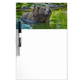 Brown bear in water Dry-Erase whiteboards