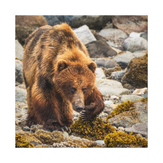 Brown bear on beach 3 canvas prints