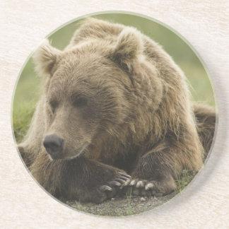 Brown bear, or Coastal Grizzly Bear, Ursus Coaster