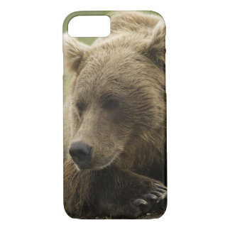 Brown bear, or Coastal Grizzly Bear, Ursus iPhone 7 Case