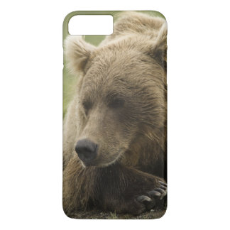 Brown bear, or Coastal Grizzly Bear, Ursus iPhone 7 Plus Case