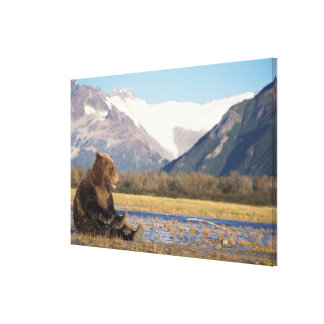 brown bear, Ursus arctos, grizzly bear, Ursus 3 Stretched Canvas Print
