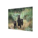 brown bear, Ursus arctos, grizzly bear, Ursus 7 Gallery Wrapped Canvas