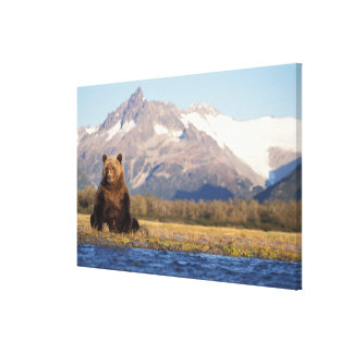 brown bear, Ursus arctos, grizzly bear, Ursus Canvas Print