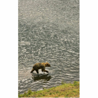 Brown bear wades through water cut out