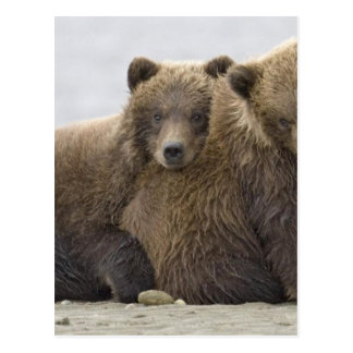 Brown Bears Loving Nature Postcard