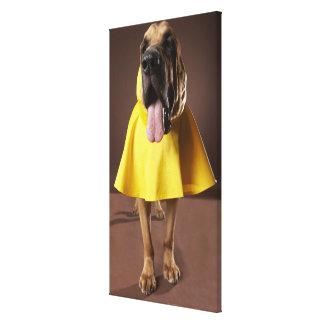 Brown bloodhound dog wearing yellow raincoat canvas prints