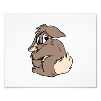 Brown bunny looking over shoulder.png photo