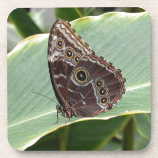 Brown Butterfly Coaster