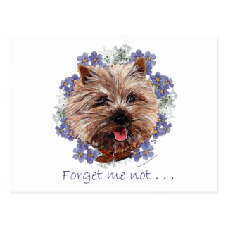 Brown Cairn Terrier Forget-me-not Postcard