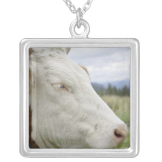 Brown cow with a sign in it?s ear on a feedlot, silver plated necklace