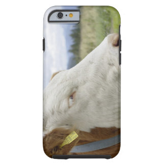 Brown cow with a sign in it?s ear on a feedlot, tough iPhone 6 case