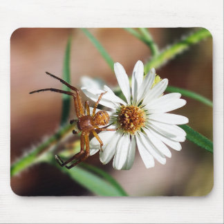 Brown Crab Spider on Daisy Flower Mousepad