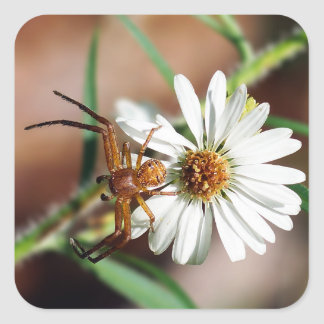 Brown Crab Spider on Flower Square Sticker