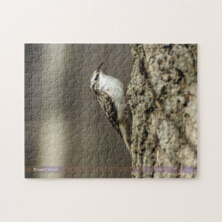Brown Creeper Bird Puzzle
