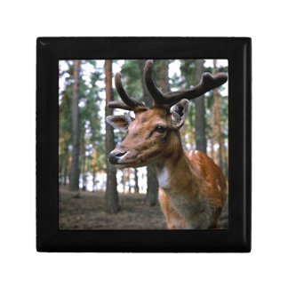 Brown Deer Near Trees Gift Box