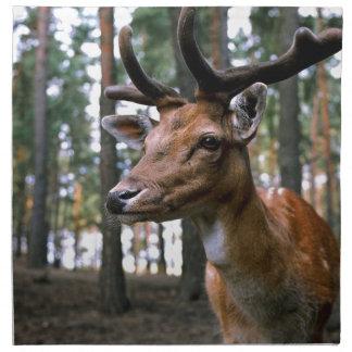 Brown Deer Near Trees Napkin