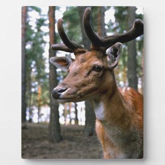 Brown Deer Near Trees Plaque