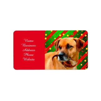 Brown Dog stars Red Yellow Green Christmas Address Label