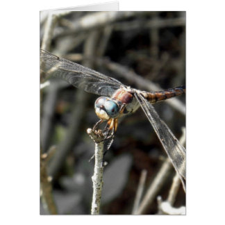Brown Dragonflies Bronze Dragonfly Photo Card