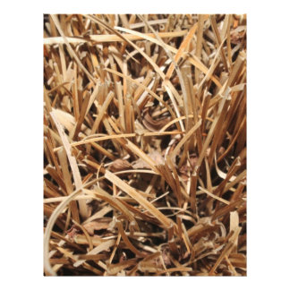 Brown Dried Out Plant Full Color Flyer