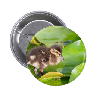Brown duckling walking on water lily leaves 6 cm round badge