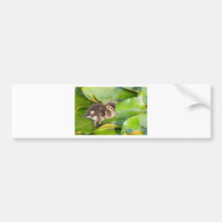 Brown duckling walking on water lily leaves bumper sticker