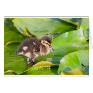 Brown duckling walking on water lily leaves card
