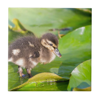 Brown duckling walking on water lily leaves ceramic tile