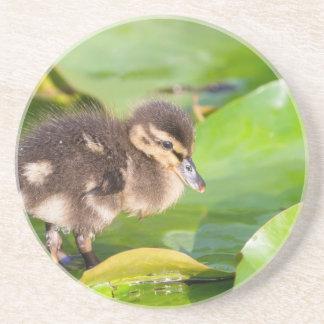 Brown duckling walking on water lily leaves drink coasters
