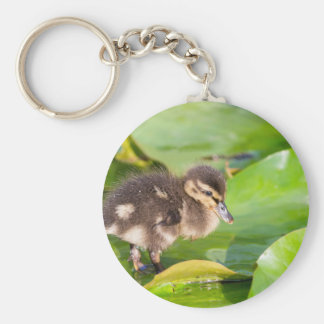 Brown duckling walking on water lily leaves key ring