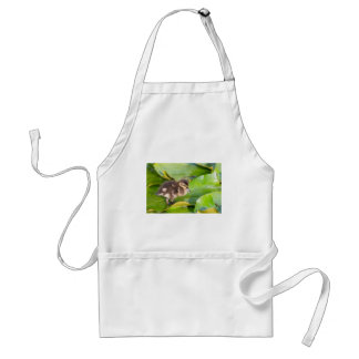 Brown duckling walking on water lily leaves standard apron