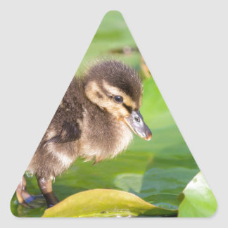 Brown duckling walking on water lily leaves triangle sticker