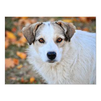 Brown eyed dog custom invites