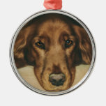 Brown Eyed Golden Irish Dog