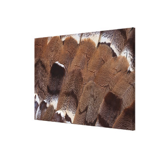 Brown Feather Design Canvas Print