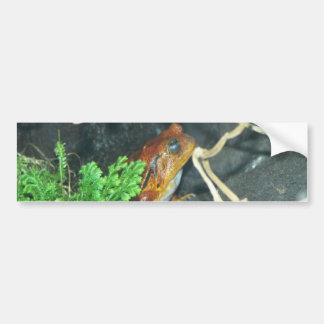brown frog bumper sticker
