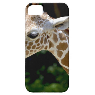 Brown Giraffe during Daytime Barely There iPhone 5 Case