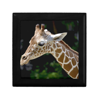Brown Giraffe during Daytime Gift Box