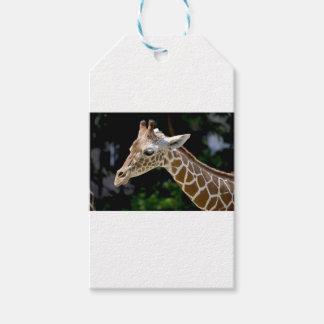 Brown Giraffe during Daytime Gift Tags