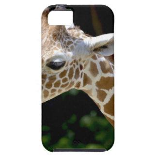 Brown Giraffe during Daytime iPhone 5 Case