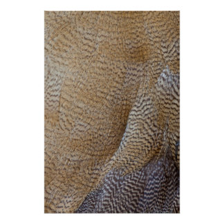 Brown Goose Feather Abstract Poster