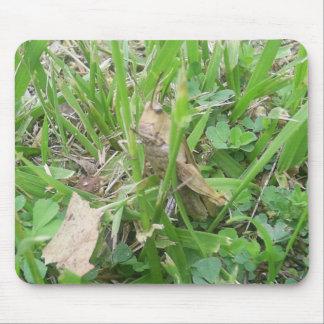 Brown Grass Hopper Hiding In Green Grass Mousepads