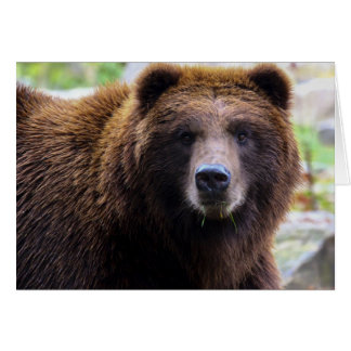 Brown Grizzly Bear Card