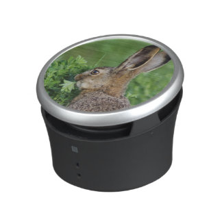 Brown Hare, Lepus europaeus, young eating, Bluetooth Speaker