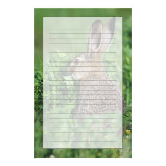 Brown Hare, Lepus europaeus, young eating, Customized Stationery