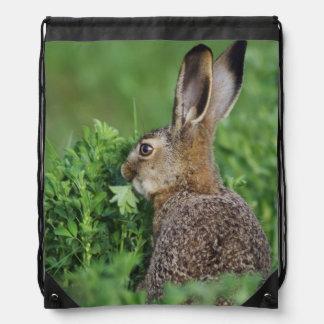 Brown Hare, Lepus europaeus, young eating, Drawstring Bag