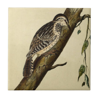 Brown Headed Creeper Small Square Tile